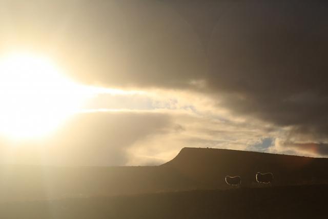 Paysage et moutons (Islande)