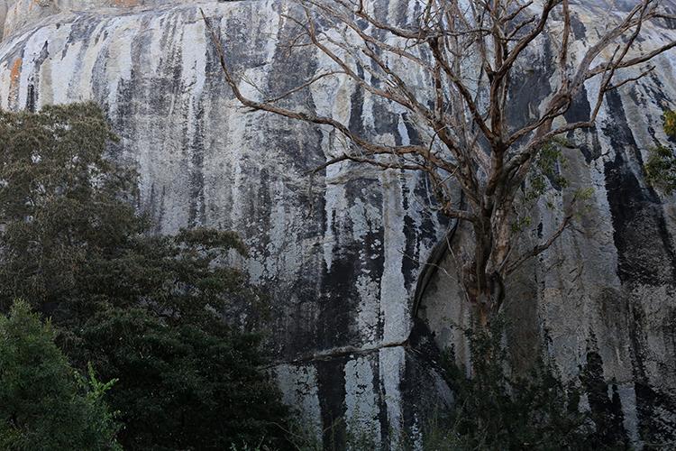 Paysage d'Afrique du Sud (Parc Kruger).