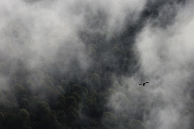 Faucon pélerin dans la brume (Pyrénées-Orientales).