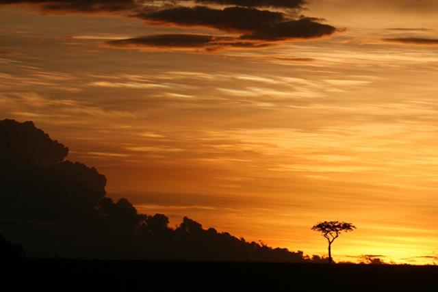 Paysage du Kenya  (Masai mara).