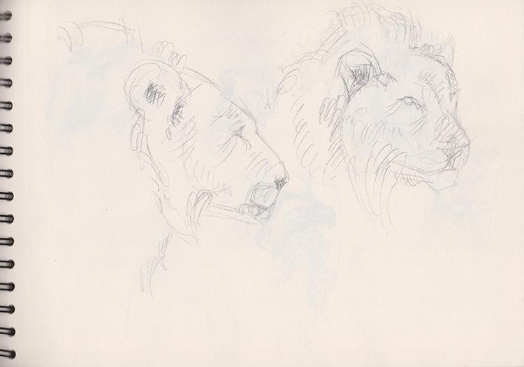 Croquis de lions.