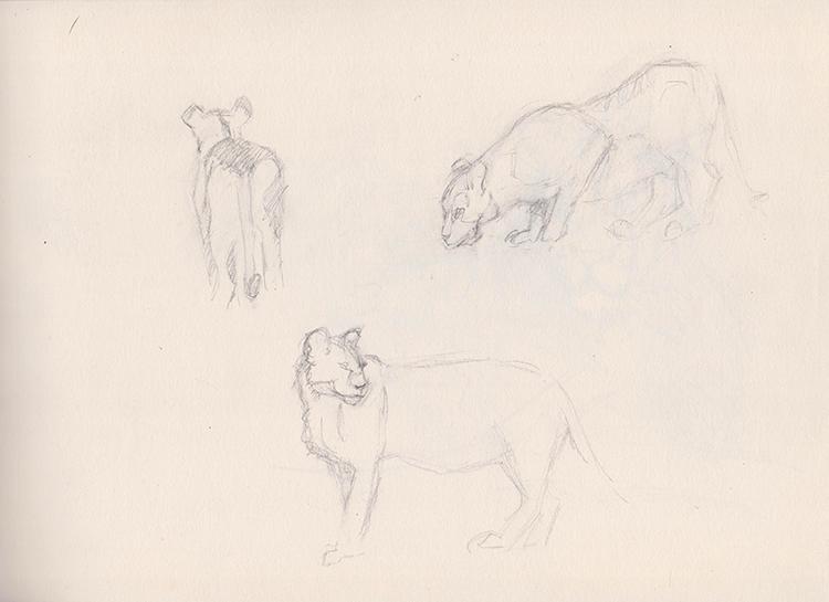 Croquis de lionnes.