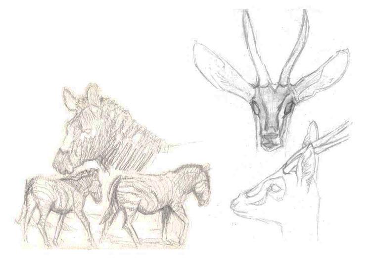 Illustration zèbres et gazelles de Thompson.