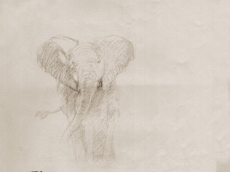 Croquis d'éléphant.