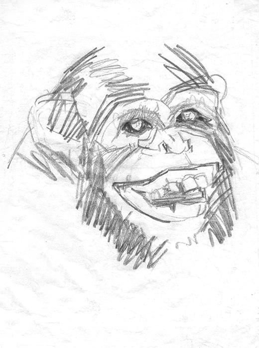 Croquis de Chimpanzé.