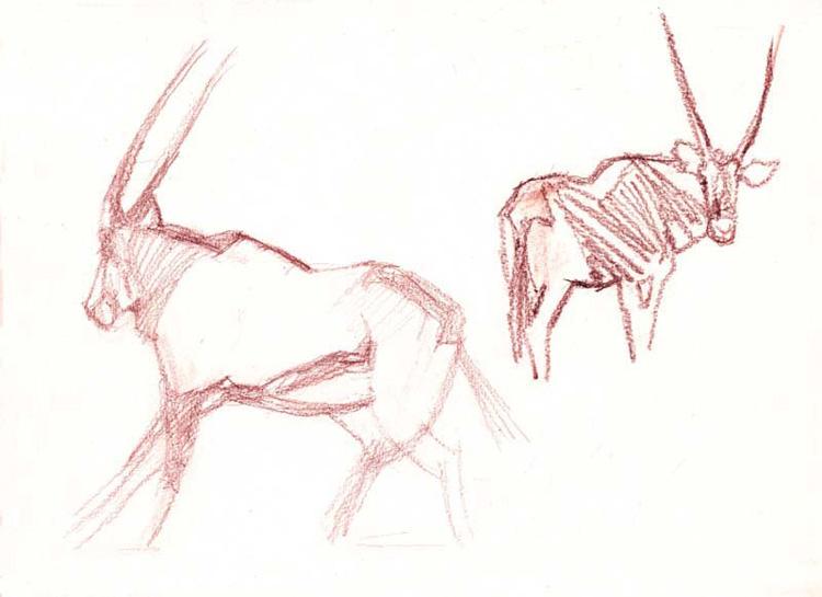 Croquis d'oryx.